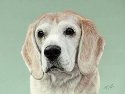 Hundeportraits in Pastellkreide / Dog drawings in soft pastels (24 cm x 32 cm)
