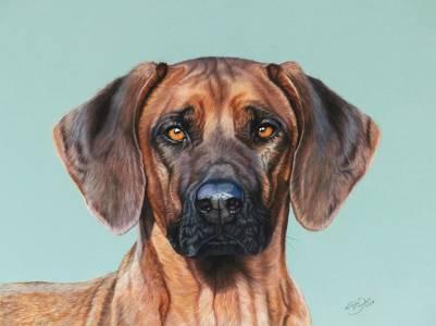 Hundeportraits in Pastellkreide / Dog paintings in soft pastels (30 cm x 40 cm)