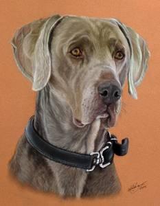 Hundezeichnungen in Pastellkreide - Dog paintings in soft pastels (24 cm x 32 cm)