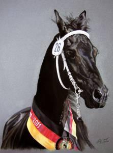 Pferdeportraits / Horse portraits - Friese / Frisian horse WIJKJE VAN DE DEMOOR