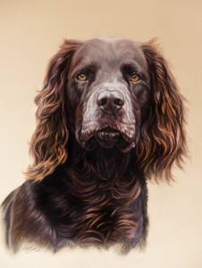 Hundezeichnungen in Pastellkreide / Dog paintings in soft pastels (40 cm x 50 cm)