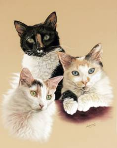 Katzenzeichnungen in Pastellkreide / Cat portraits in soft pastels (40 cm x 50 cm)