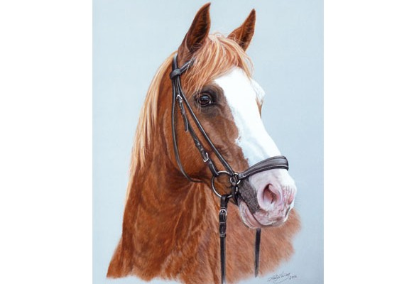 Horse paintings and horse portraits by Katja Sauer
