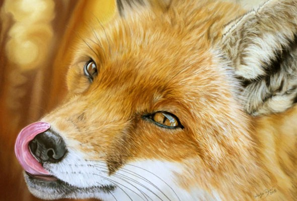 Wildlife paintings and wildlife portraits by Katja Sauer