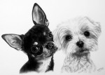 Dog paintings and dog portraits by Katja Sauer