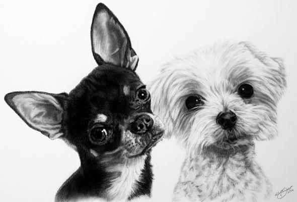 Hundeportraits und Hundezeichnungen von Katja Sauer