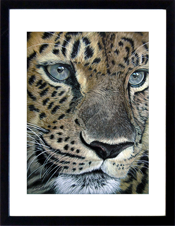 Animal drawings and animal paintings - leopard in soft pastels by Katja Sauer