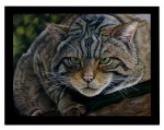 Scottish Wildcat in soft pastels by Katja Sauer