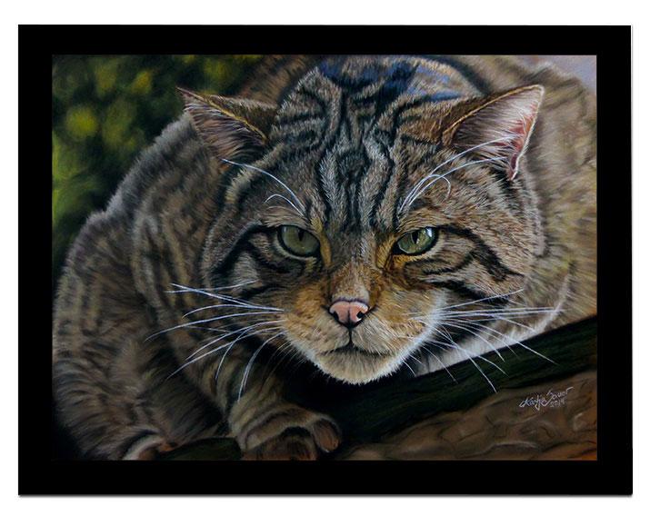 Schottische Wildkatze in Pastellkreide von Katja Sauer
