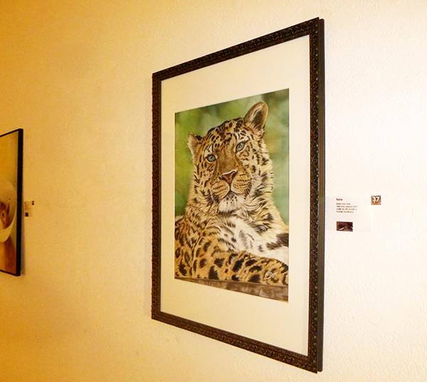 """Ausstellung im Alten Dampfbad in Baden-Baden - Amur Leopard """"Akin"""" in Pastellkreide von Katja Sauer"""