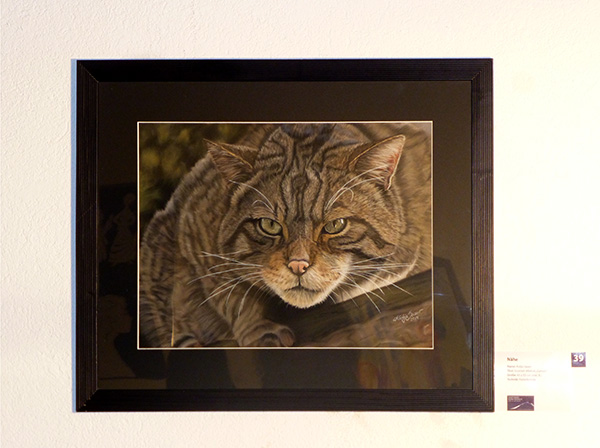 "Exhibition in the Old Steam Bath in Baden-Baden - Scottish Wildcat ""Garton"" in soft pastels by Katja Sauer"