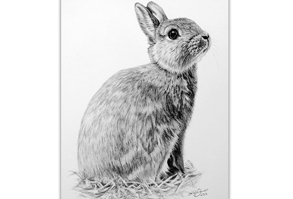 Rabbit - Animal portraits in charcoal by Katja Sauer