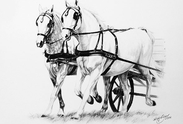 Horses and cart - horse drawings in charcoal by Katja Sauer