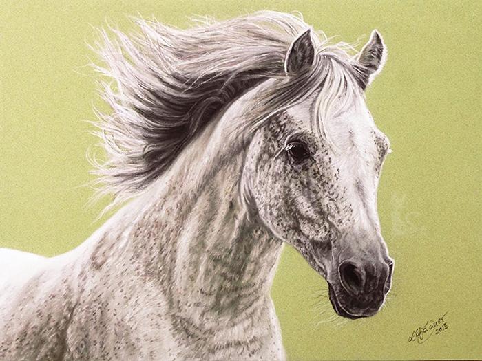Pferdeportraits und Tierzeichnungen in Pastellkreide - Vollblut-Araberhengst IBN SHEIKH EL ARABY (24 cm x 32 cm)
