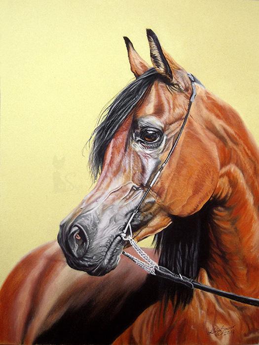 Pferdeportraits und Tierzeichnungen in Pastellkreide - Araberhengst PELENG (30 cm x 40 cm)
