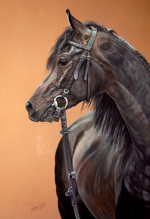 Pferdezeichnungen und Tierportraits in Pastellkreide - Araberhengst CHIMERYK (50 cm x 65 cm) / Danke Bogdan