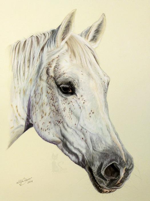 Pferdeportraits und Tierzeichnungen in Pastellkreide - Araberstute MAHRANA (24 cm x 32 cm)