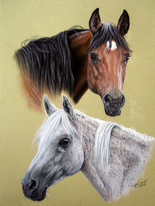 Tierzeichnungen und Pferdeportraits in Pastellkreide - Araberstuten BAHIRA und BAHRA (24 cm x 32 cm)