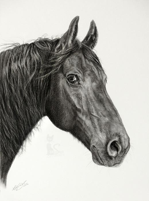 Pferdeportraits und Tierzeichnungen in Kohle und Graphit - BRONCO (30 cm x 40 cm)