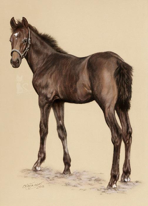 Pferdeportraits und Tierzeichnungen in Pastellkreide - Fohlen C EST LA VIE (24 cm x 32 cm)