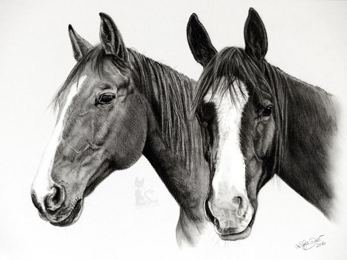 Tierzeichnungen und Pferdeportraits in Kohle und Graphit - Collage GUIDAM und GRISU (30 cm x 40 cm)