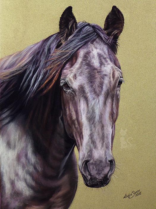 Tierportraits und Pferdezeichnungen in Pastellkreide - Quarter Horse HOPE (24 cm x 32 cm)