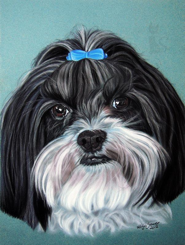Shih Tzu MICKEY in Pastellkreide (24 cm x 32 cm)