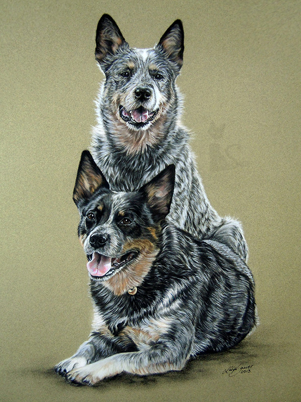 Australian Cattle Dogs CHAYENNE und DIGGER - Collage in Pastellkreide (30 cm x 40 cm)