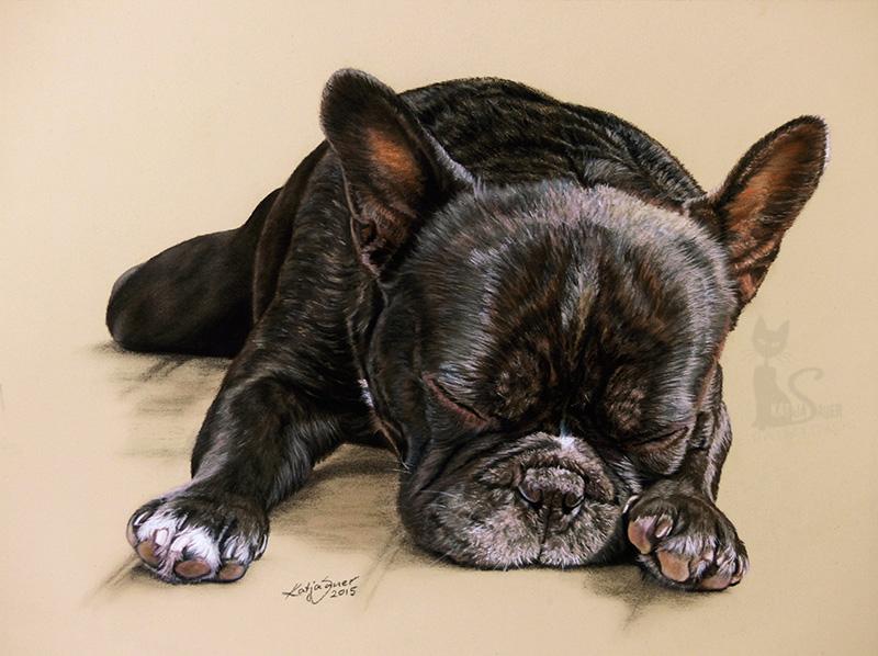 Französische Bulldogge CARUSO in Pastellkreide (24 cm x 32 cm)