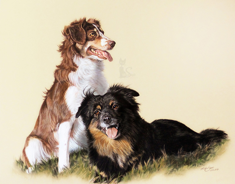 Mini Australian Shepherds HAYLIE und QUEEN - Collage in Pastellkreide (40 cm x 50 cm)