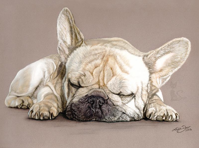 Französische Bulldogge WILLY in Pastellkreide (24 cm x 32 cm)
