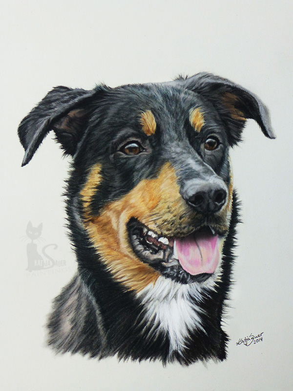 Hund TOBI in Pastellkreide (24 cm x 32 cm)