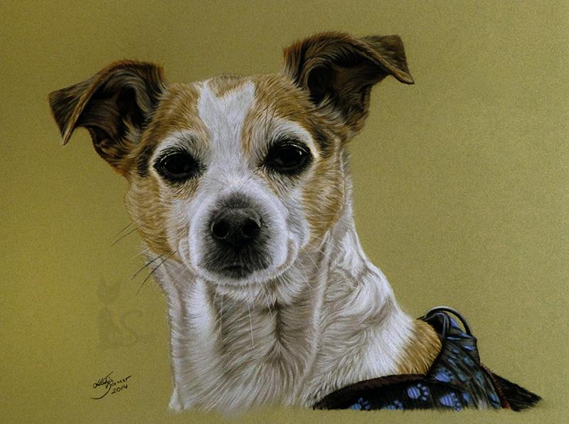 Jack Russell Terrier GINA in Pastellkreide (30 cm x 40 cm)