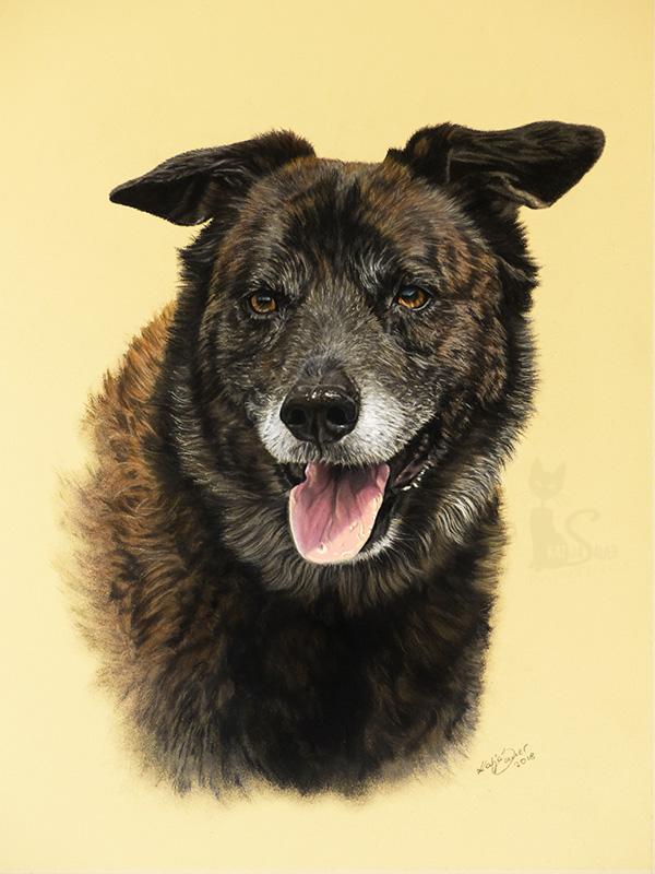 Mischlingshund BUDDY in Pastellkreide (30 cm x 40 cm)