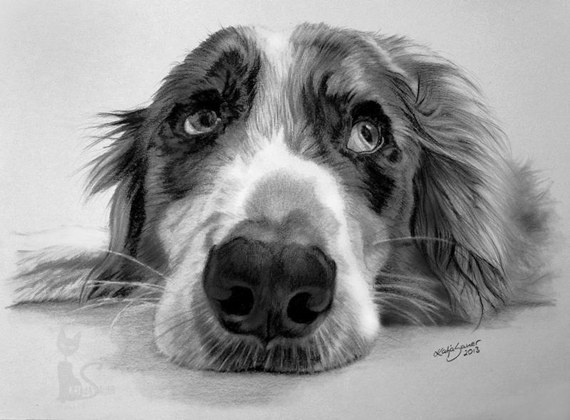 Hund SAM in Kohle und Graphit (21 cm x 30 cm)