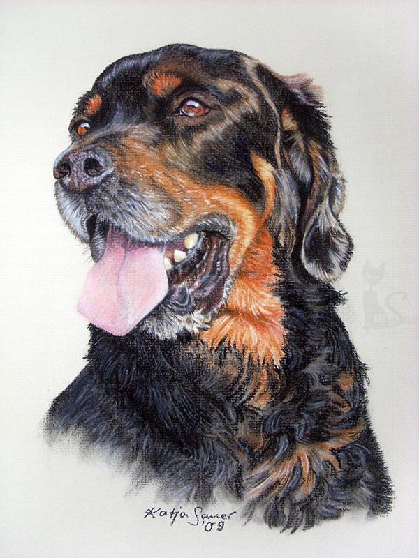 Mischlingshund PRINZ in Pastellkreide (30 cm x 40 cm)