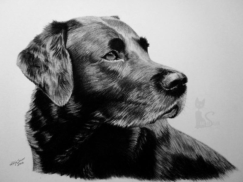 Labrador IVANHOE in Kohle und Graphit (21 cm x 30 cm)