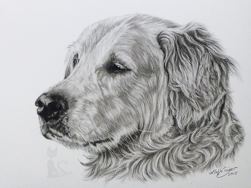 Golden Retriever PATCHY in Kohle und Graphit (21 cm x 30 cm)