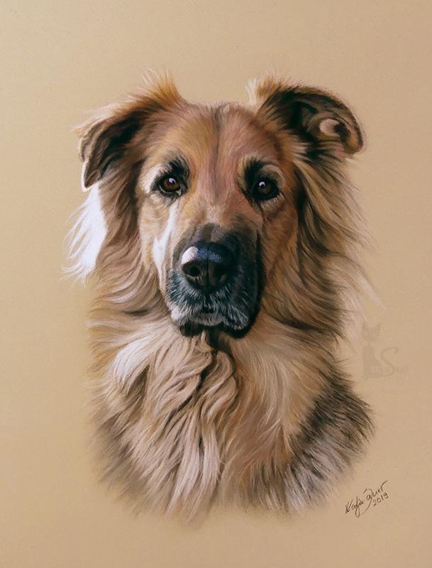 Mischlingshund JOHNNY in Pastellkreide (24 cm x 32 cm)