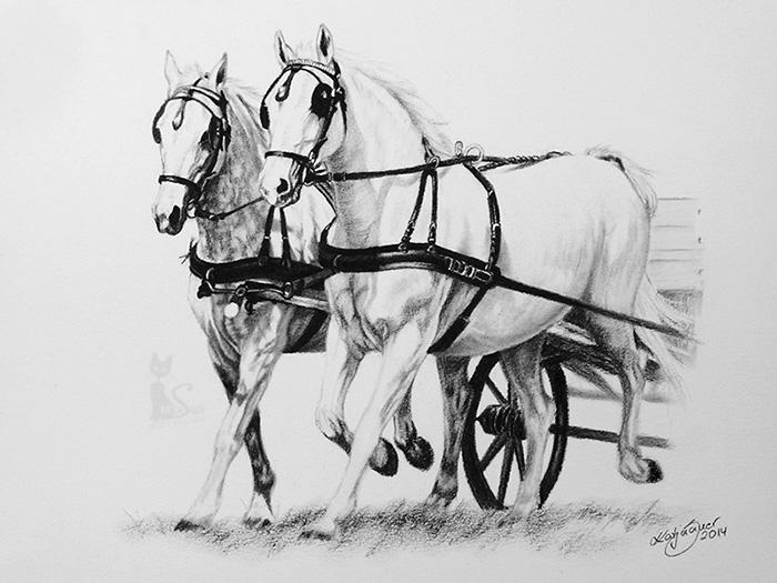 Tierzeichnungen und Pferdezeichnungen in Kohle und Graphit - Pferdegespann (21 cm x 30 cm)