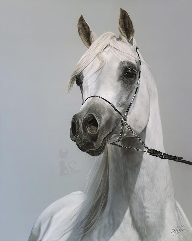 Tierzeichnungen und Pferdeportraits in Pastellkreide - Araberhengst AL LAHAB (40 cm x 50 cm) / Danke Martin Kubat