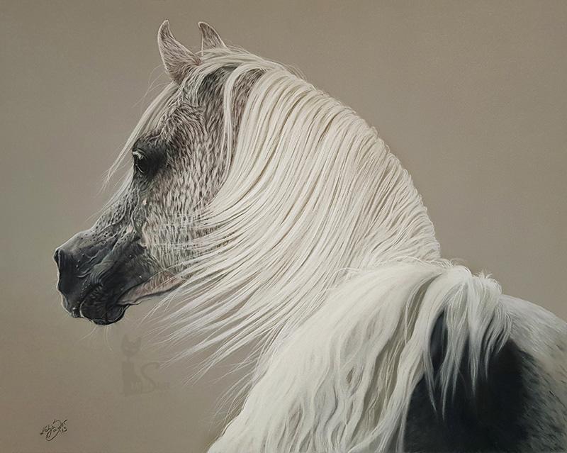 Tierzeichnungen und Pferdeportraits in Pastellkreide - Araberhengst NK HAFID JAMIL (40 cm x 50 cm) / Danke Gigi Grasso
