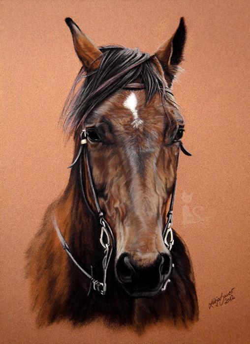 Pferdeportraits und Tierzeichnungen in Pastellkreide - ARTABAN (24 cm x 32 cm)