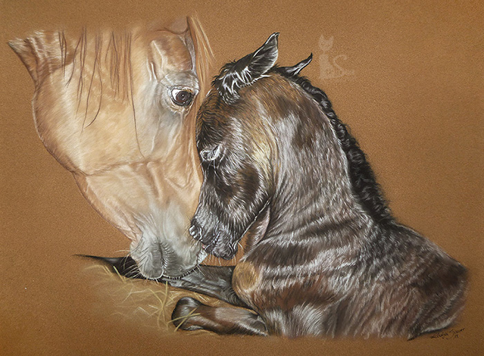 Pferdezeichnungen und Tierportraits in Pastellkreide - Araberpferde FARANAK und FAREED (40 cm x 50 cm)