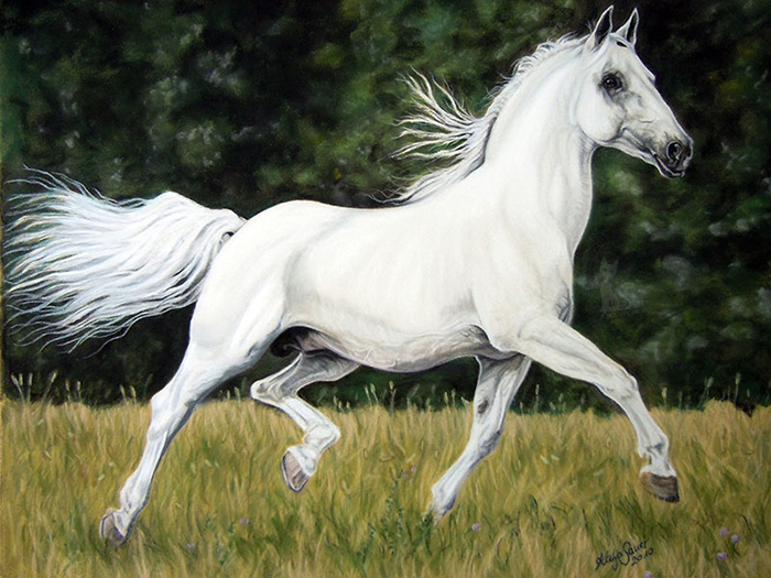 Pferdeportraits und Tierportraits in Pastellkreide - Lippizaner BATOSA (30 cm x 40 cm) / Danke Christiane Slawik