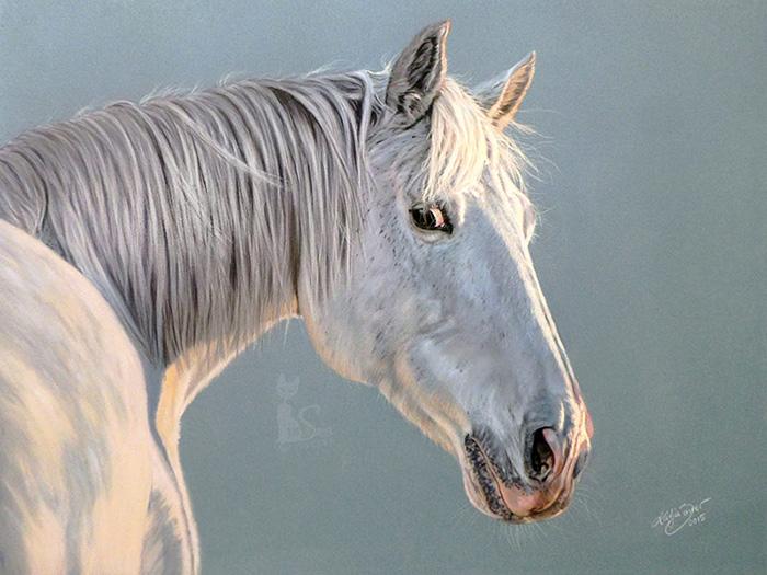 Tierportraits und Pferdezeichnungen in Pastellkreide - LOTTE (50 cm x 65 cm)