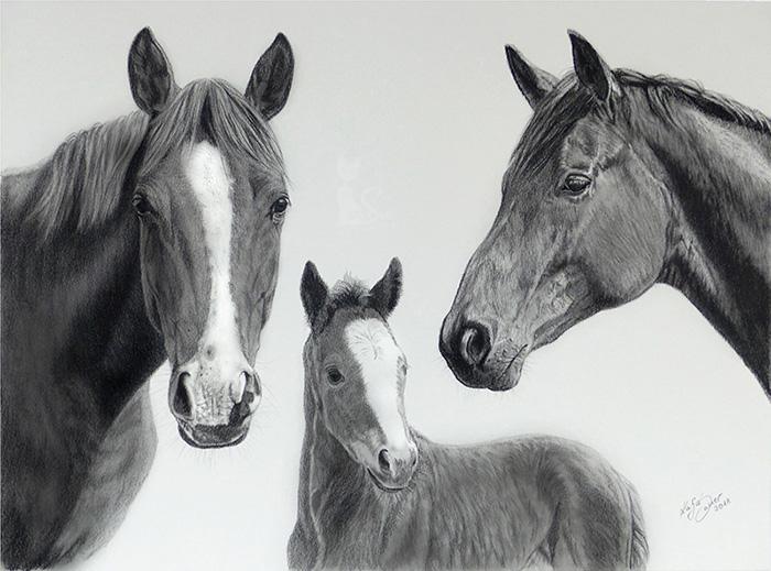 Pferdezeichnungen und Tierportraits in Kohle und Graphit - Collage PFERDEFAMILIE (30 cm x 40 cm)