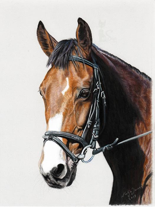 Pferdezeichnungen und Tierportraits in Pastellkreide - GRITTA (18 cm x 24 cm)