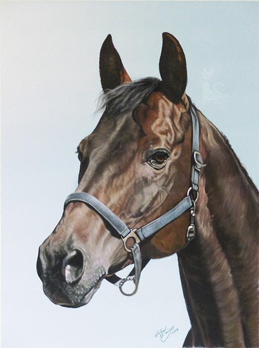 Pferdezeichnungen und Tierportraits in Pastellkreide - BRADY (30 cm x 40 cm)