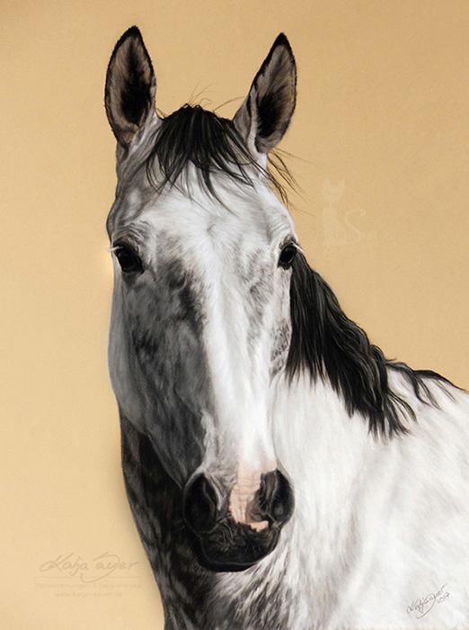 Pferdezeichnungen und Tierzeichnungen in Pastellkreide - JIMI (30 cm x 40 cm)
